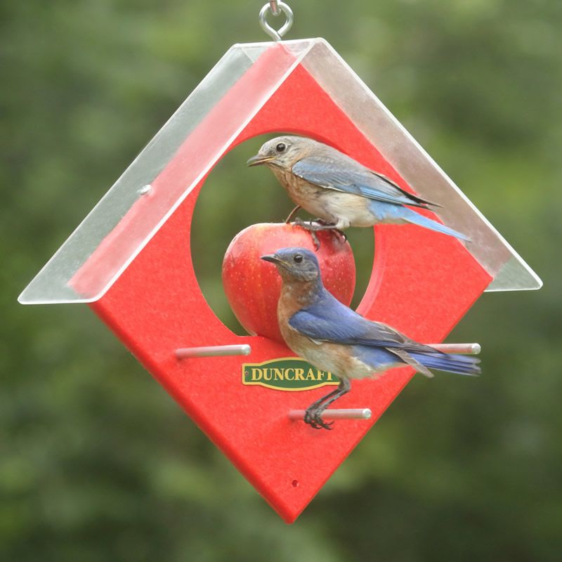 Duncraft Apple Kabob Feeder: Our Simple Speared Fruit Feeder Provides An  Easy Way To Attract Bluebirds, Titmice And Other Fruit Eating Birds To Your  Own ...