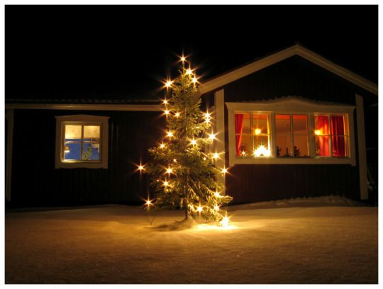 Fuck Yeah , Christmas Trees ! holidays and winter Pinterest