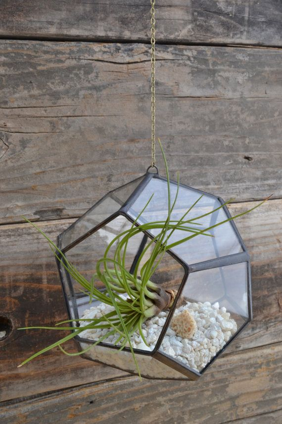 Medium Dodecahedron Hanging Terrarium Recycled By Megamyers