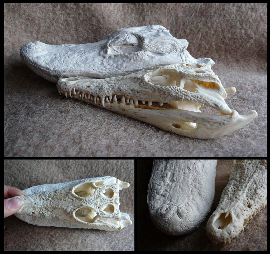 Comparison: Caiman vs. Crocodile | Anatomy | Animal | Pinterest