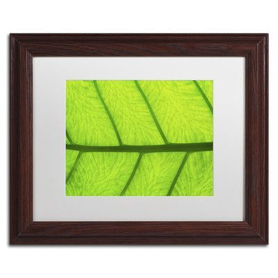 Trademark Art Leaf Texture III by Cora Niele Framed Photographic Print Size: 1