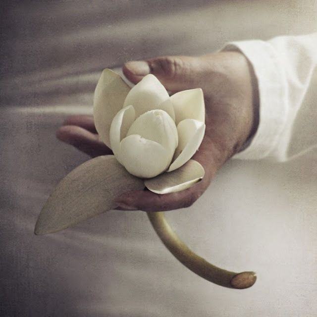 White Lotus Symbol Of Purity Hands Tell A Story Pinterest