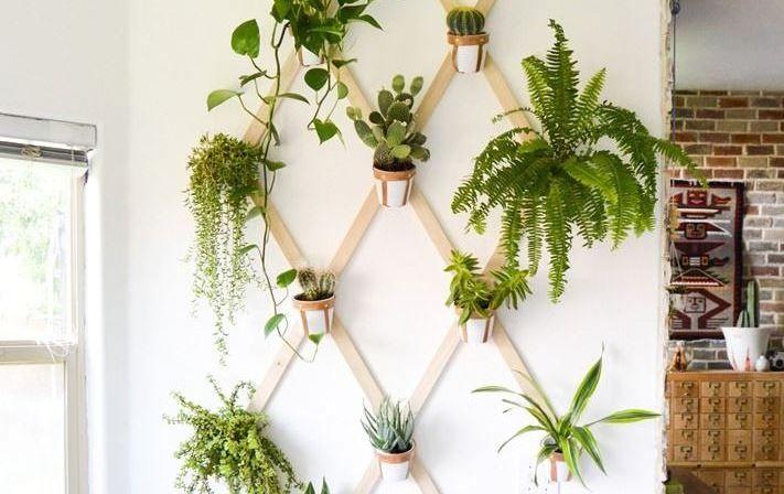 Planten Aan De Muur.Gezellig Plantjes Aan De Muur Muur Plant Planten En