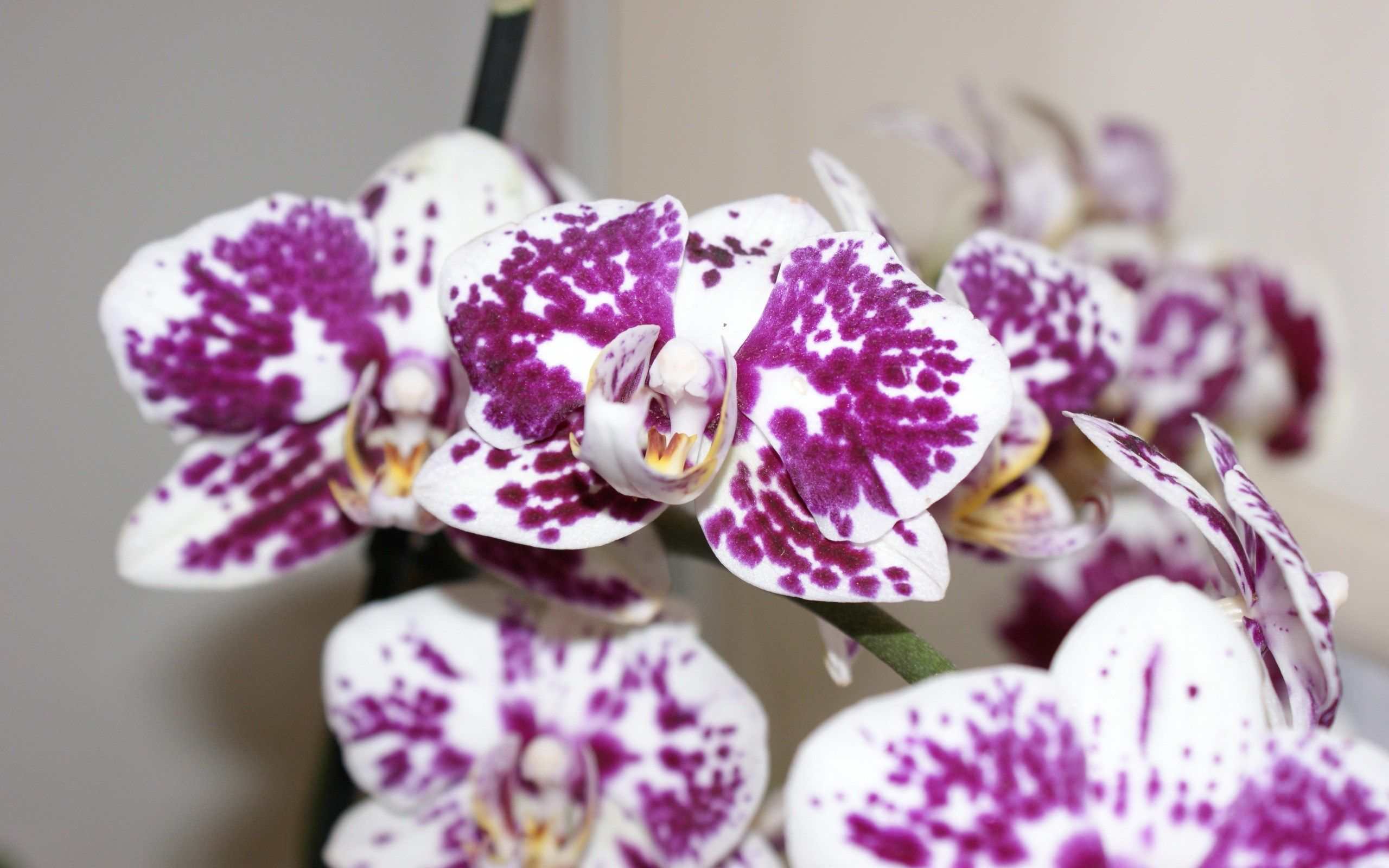 Orchid backround full hd backgrounds chisholm brian x