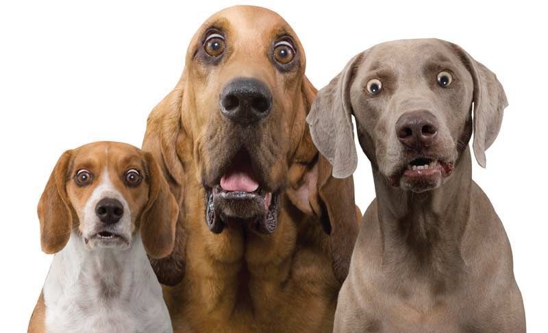 9 Hilariously Surprised Dog Faces Surprised Dog Funny Dogs