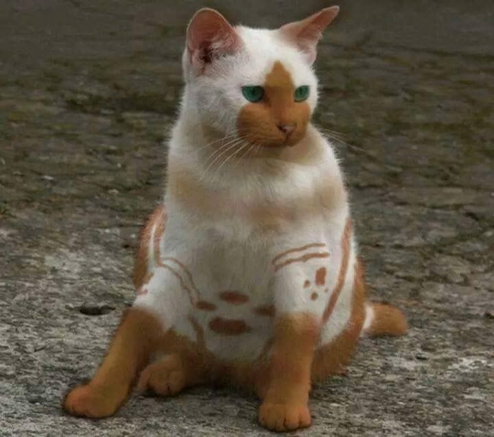 The Most Unusual Markings I Ve Ever Seen So Cute Cute Animals Pretty Cats Cats And Kittens