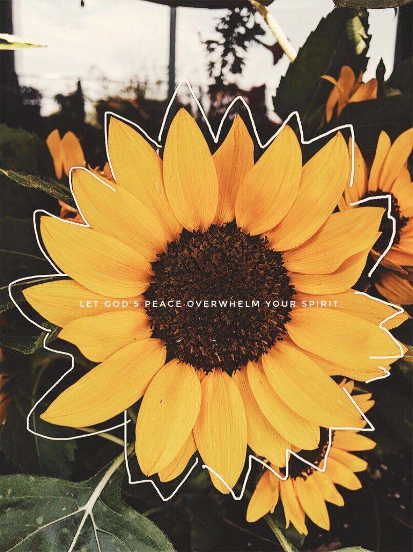 Pin by Nubia Cruz on scripture/motivation   Sunflower ...