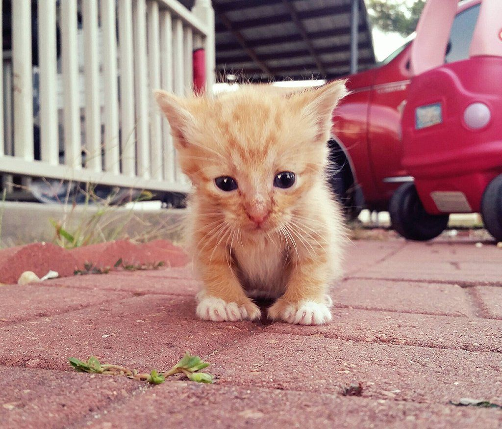Little Cheeto and his extra toes Cat lovers, Cute animal