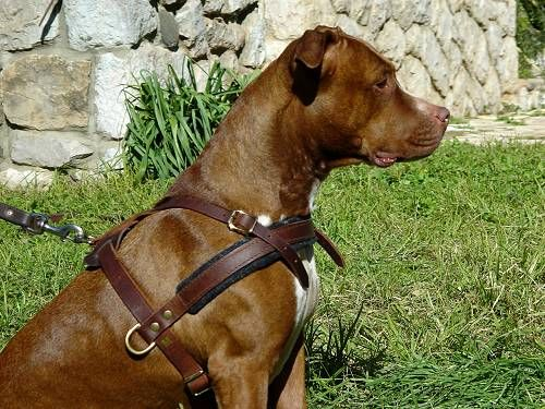 Tracking Pulling Agitation Leather Dog Harness For Pitbull