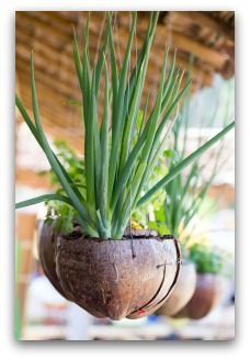 herb container gardens indoors or outdoors - Vegetable Garden Ideas For Small Spaces