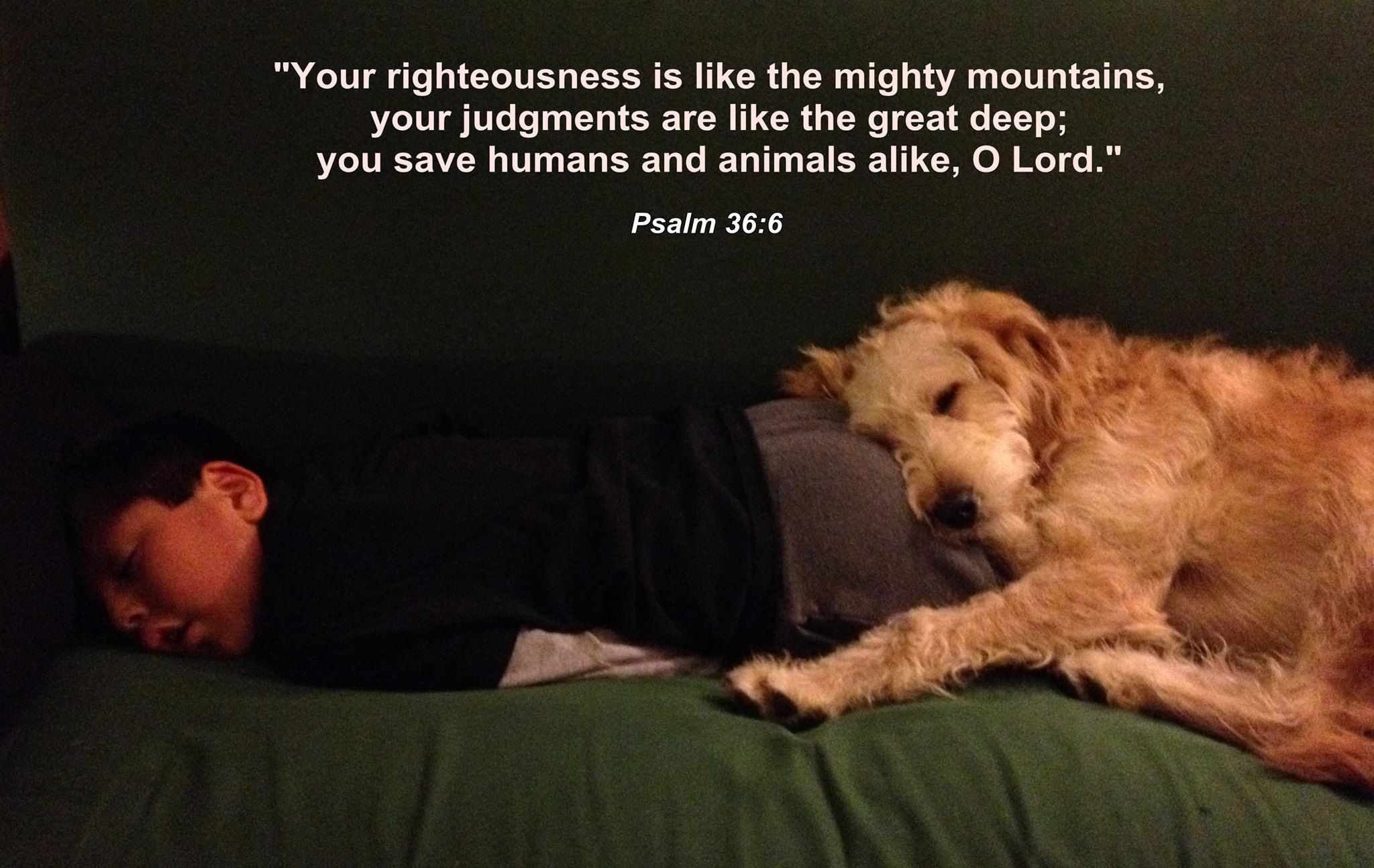 Dog And Child Psalm 36 6 Psalm 36 Dog Heaven Psalms