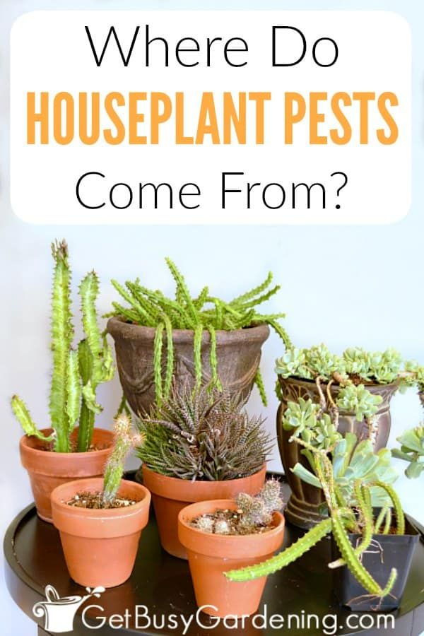 Where Do Houseplant Pests Come From? in 2020 | Organic ...