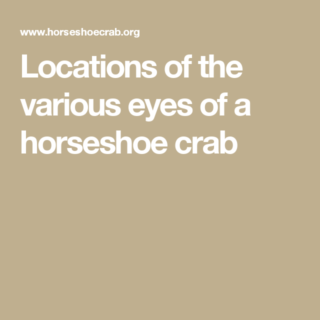Locations of the various eyes of a horseshoe crab | creature ...