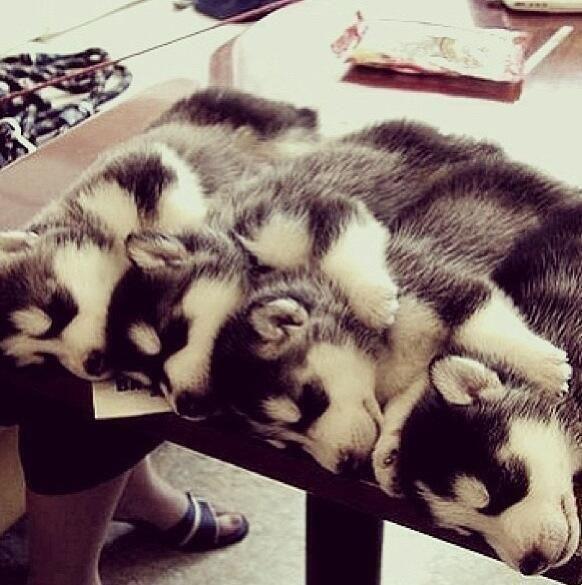 Husky hugs.