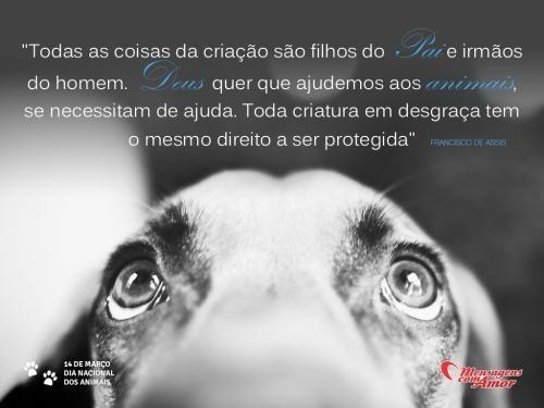 Imagens De Dia Dos Animais R Pinterest Cachorros Gatos E Frases