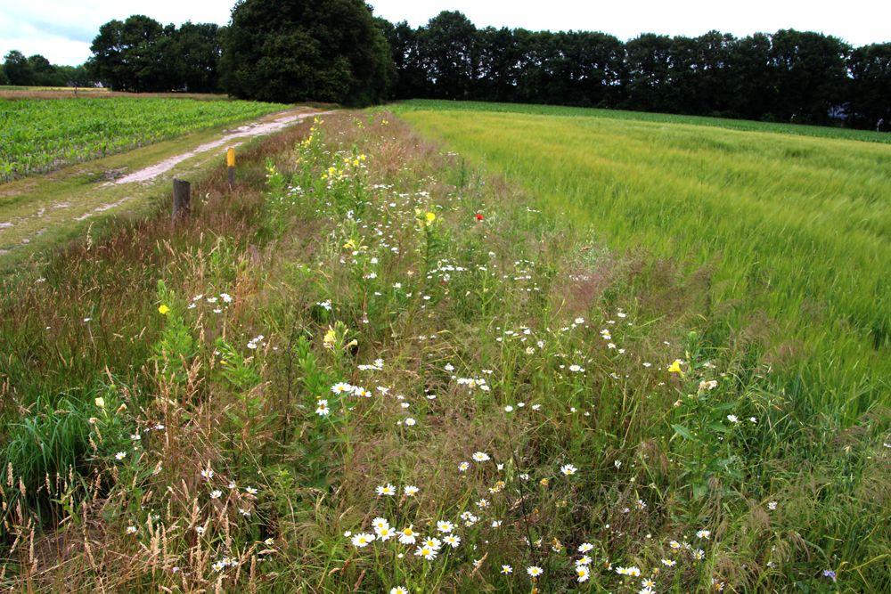 Akkerranden worden aangelegd voor een goede bestuiving van de velden