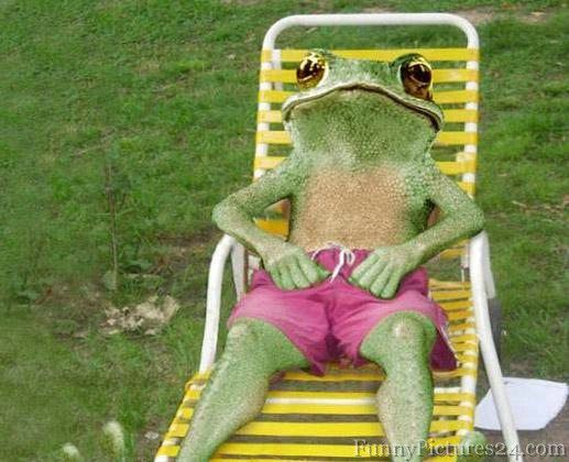 Sunbathing Frog I Love Frogs Funny Frog Pictures Frog