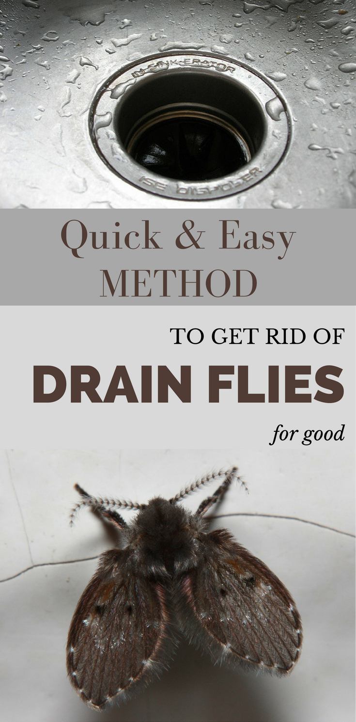 Quick And Easy Method To Get Rid Of Drain Flies For Good Getcleaningtips Net Toilet Cleaning Deep Cleaning Tips House Cleaning Tips