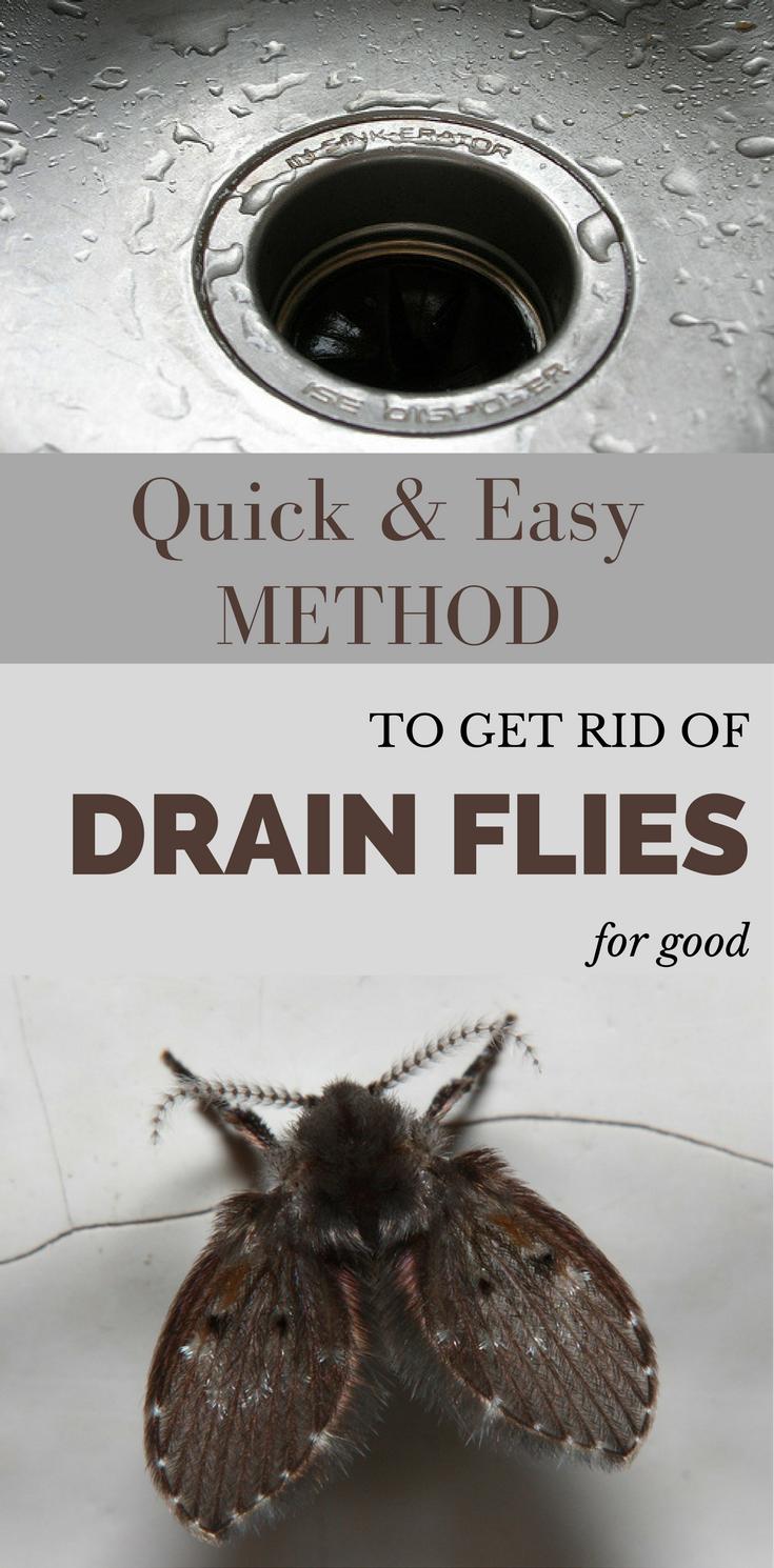 How to get rid of drain flies in bathroom - Quick And Easy Method To Get Rid Of Drain Flies For Good