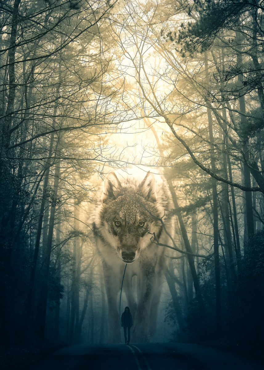 'Wolf Walking' Metal Poster Alex Griffith Displate in