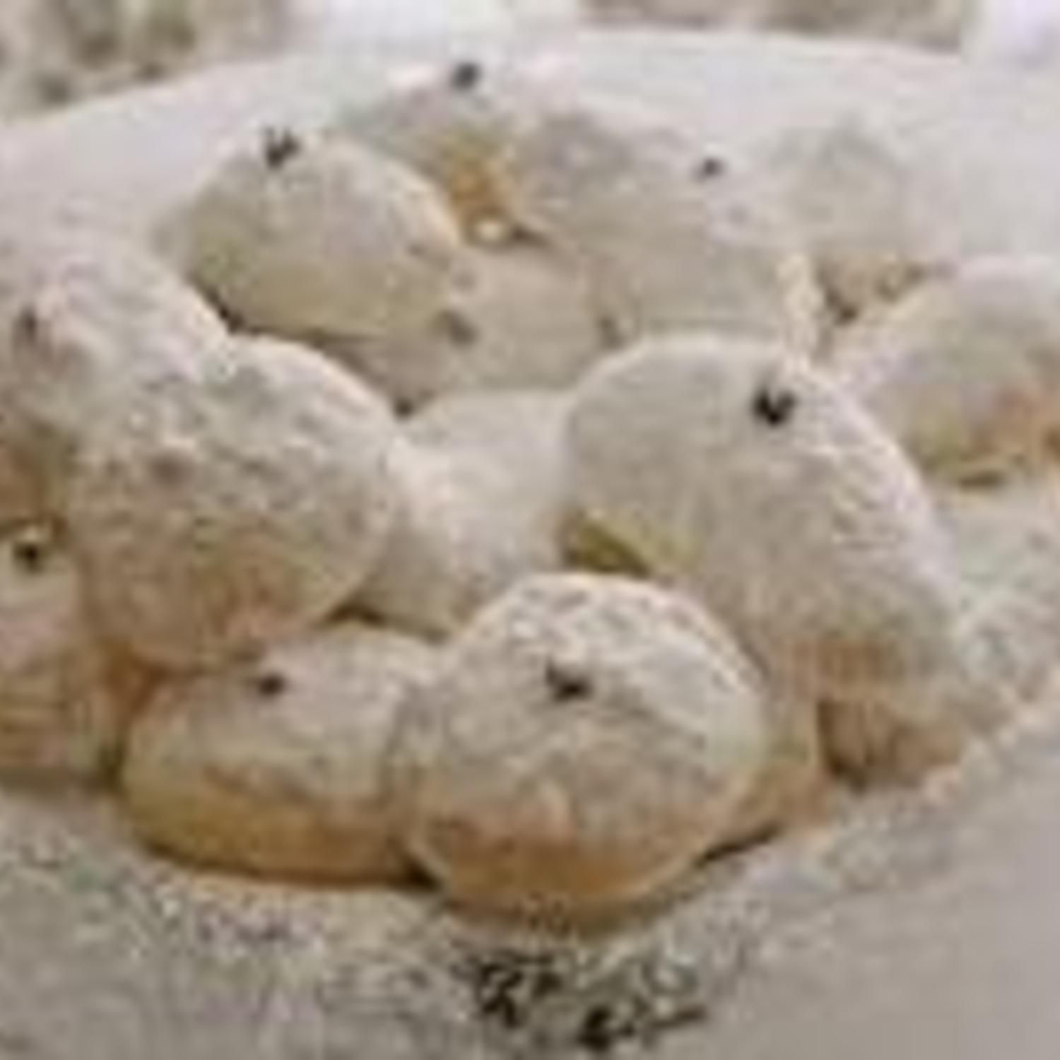 Kourambiedes greek christmas cookies recipe greek christmas kourambiedes greek christmas cookies recipe greek christmas christmas cookies and cookie recipes forumfinder Gallery