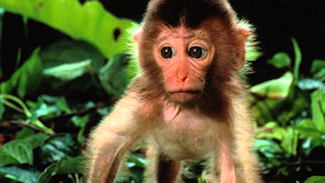 Baby Monkey Photos Wallpaper For Devices