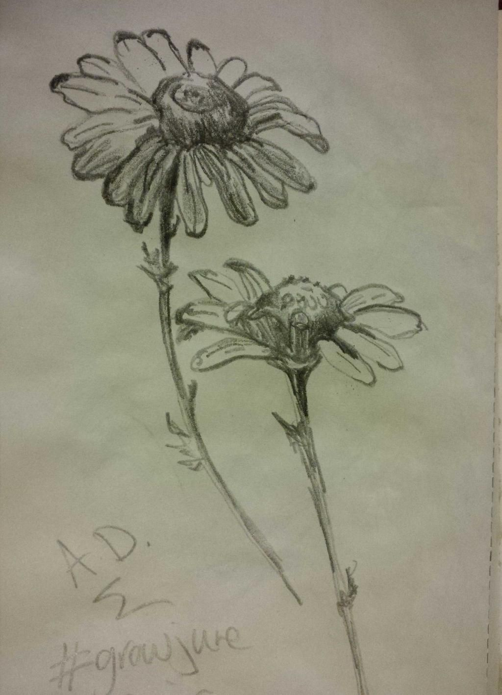 More daisy quick sketches #growjune #thedailysketch #drawing