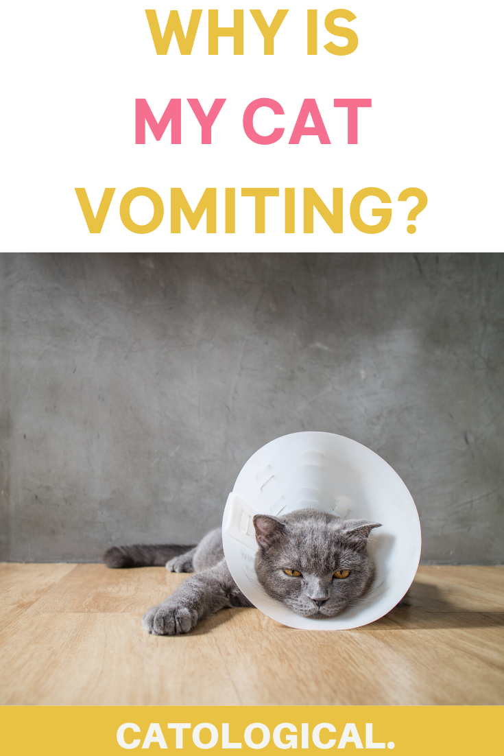 It can be scary for your cat to be coughing blood or even