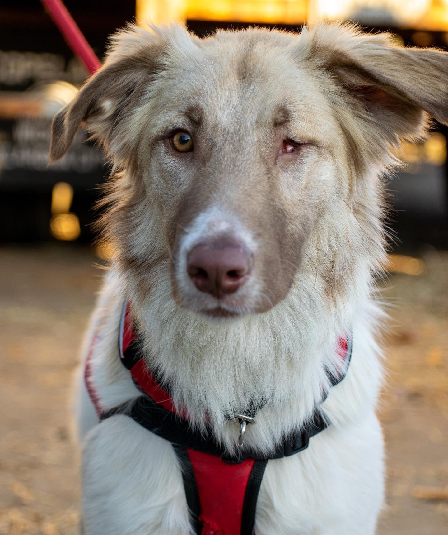 Animal Welfare League Of Alexandria A045510 Coco Animal Welfare League Animals Pet Adoption