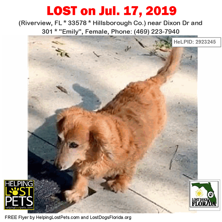 Have You Seen This Dog Lostdog Emily Riverview Dixon Dr 301 Fl 33578 Hillsborough Co Dog 07 17 2019 Fem Losing A Dog Dogs Losing A Pet