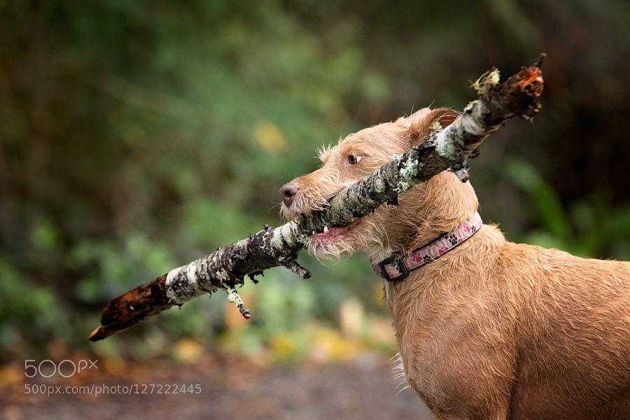 Al Rescue Dog