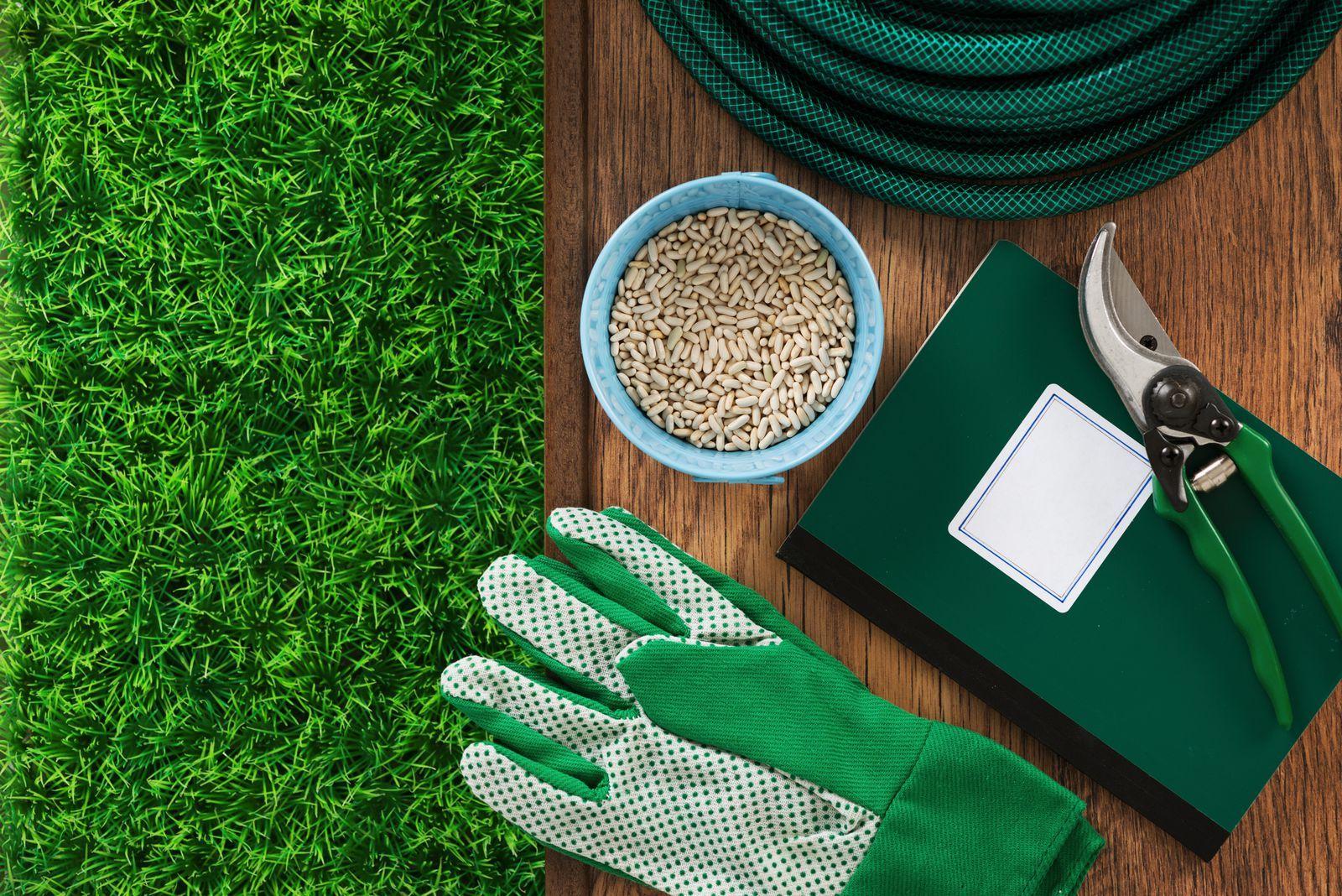 Pin On Backyard Gardening