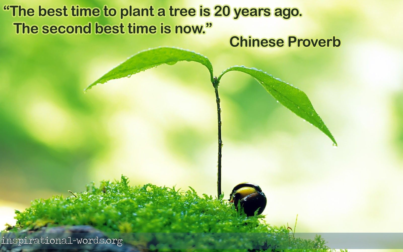 The best time to plant a tree - post  Plants, Thought provoking