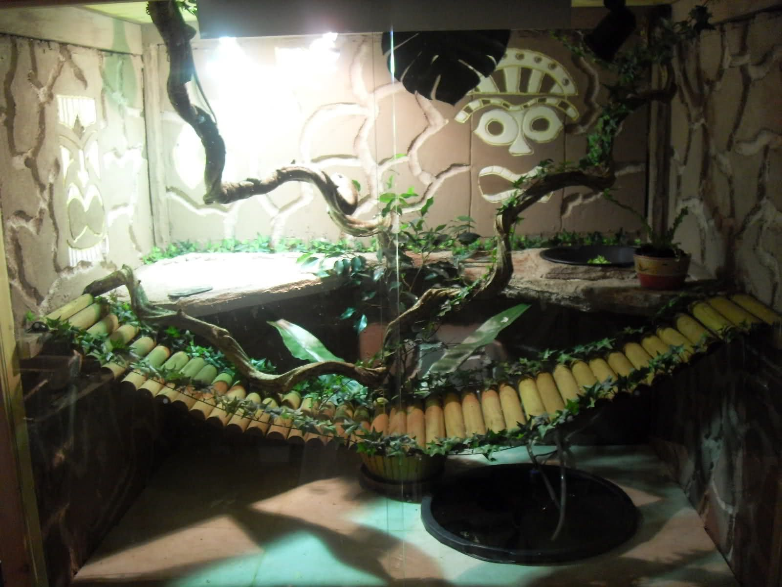 iguana enclosure plans ReLizard Enclosures Chinese