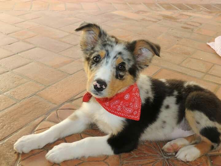 Buddy as a little puppy