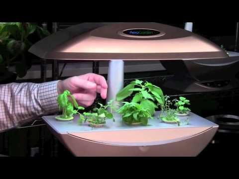 8 Week Pruning Video Series Aerogarden Blog Aerogarden 400 x 300