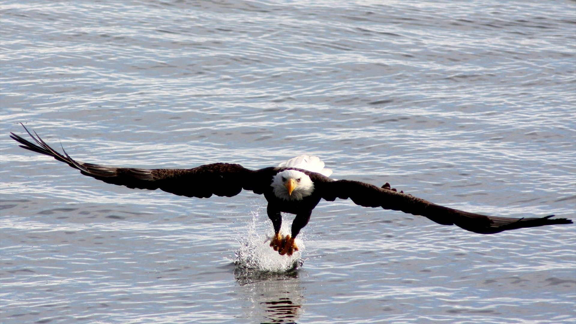Free Eagles Wallpapers Wallpaper 1920×1080 Eagle Wallpapers Free ...