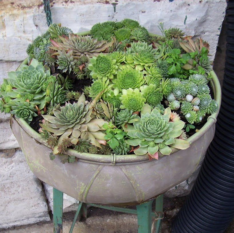Succulents in containers a blend of coarse sand crushed - Best potting mix for container gardening ...