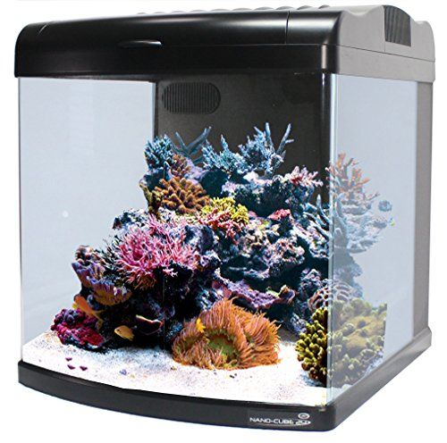 Jbj Lighting 12 Gallon Nano Cube Deluxe Aquarium Jbj Lighting Http Www Amazon Ca Dp B000rfpr6a Ref Cm Sw R Pi Dp Sczkwb1hnerks Leds