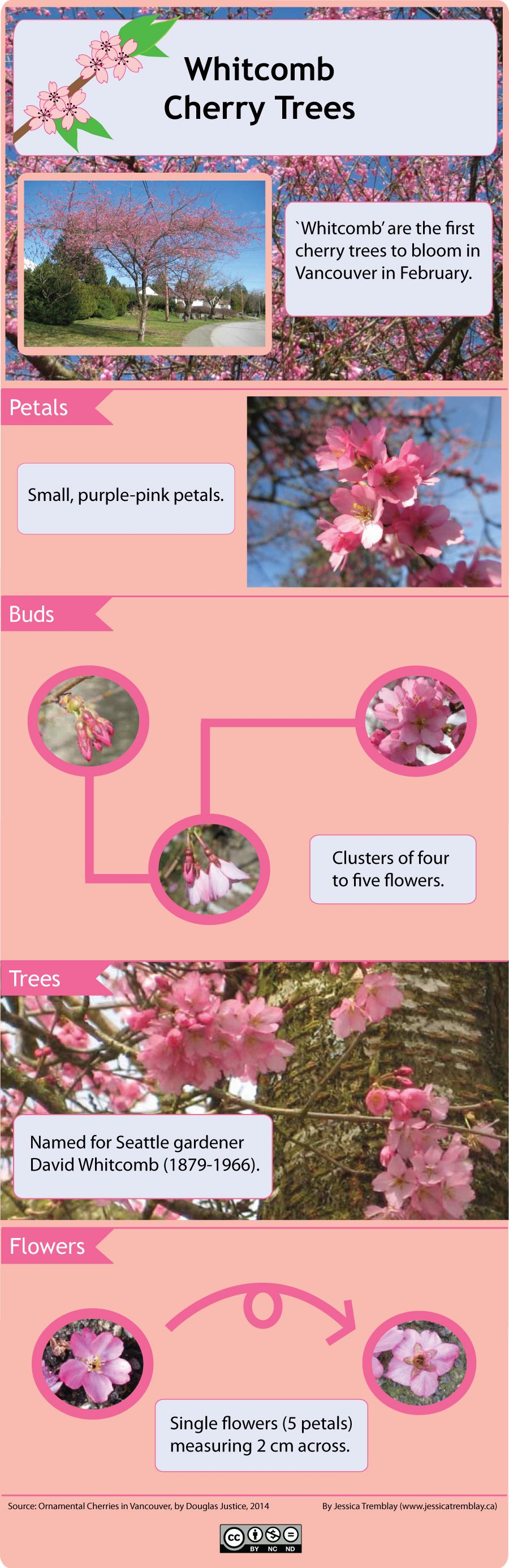 Identifying Cherry Trees By Blossom Google Search Single Flower Pink Petals Cherry Tree