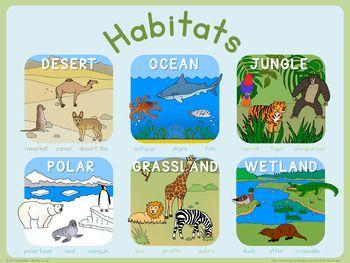 Habitats poster | Animal habitats preschool, Habitats, Habitats projects
