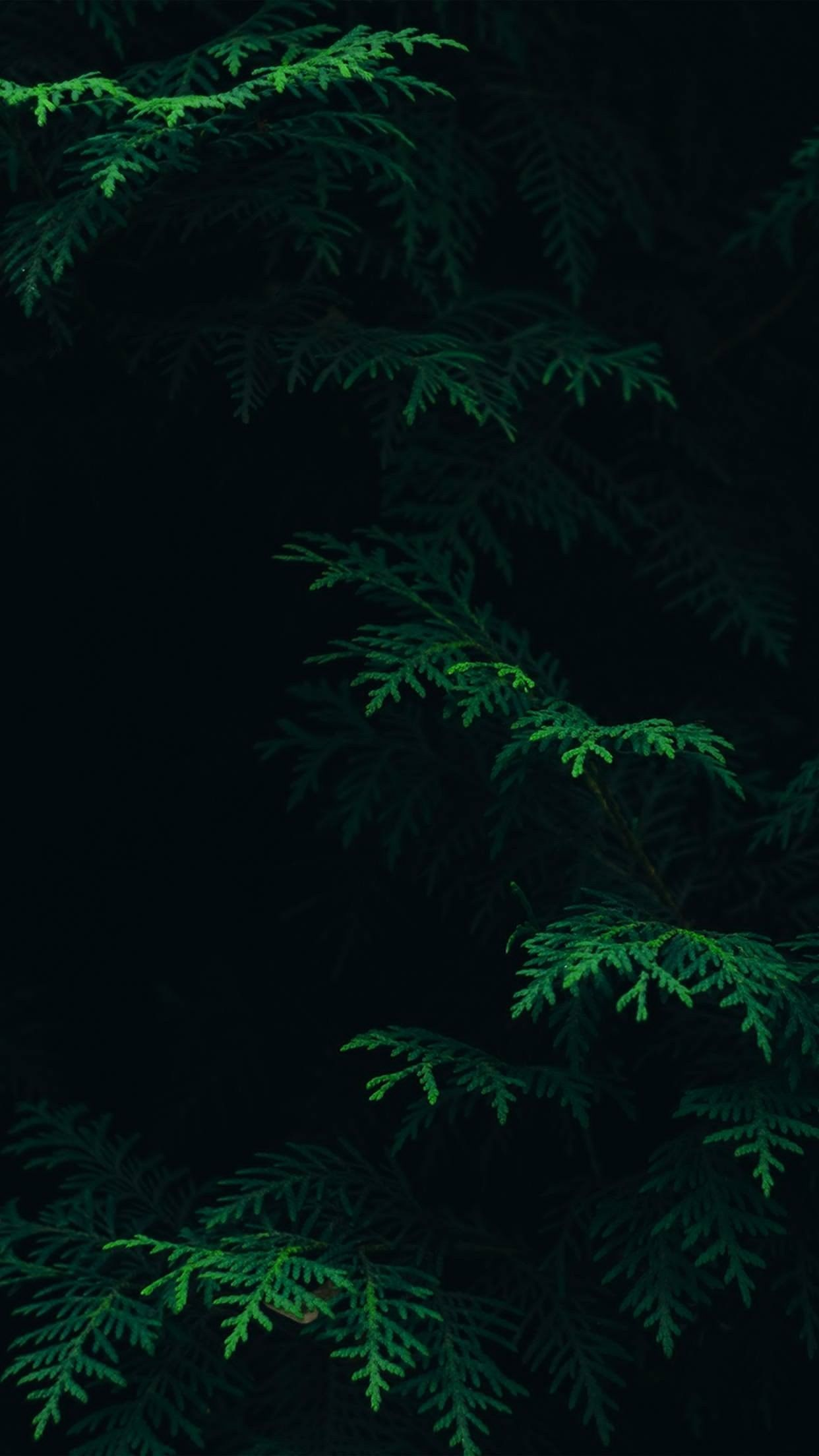 Обоина darkwallpaperiphone Forest wallpaper iphone