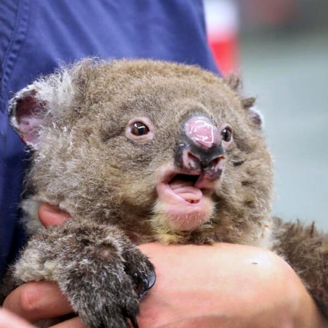 7news Australia On Instagram An Urgent Plea Has Gone Out For 120 Volunteers Needed To Help Deliver Food To W In 2020 Cute Baby Animals Cute Animals Australia Animals