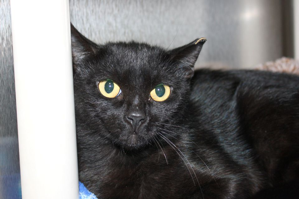 Meet Lilly Happy Days Ahead I Ve Been Adopted With Images Animals Animal Shelter Cute Animals