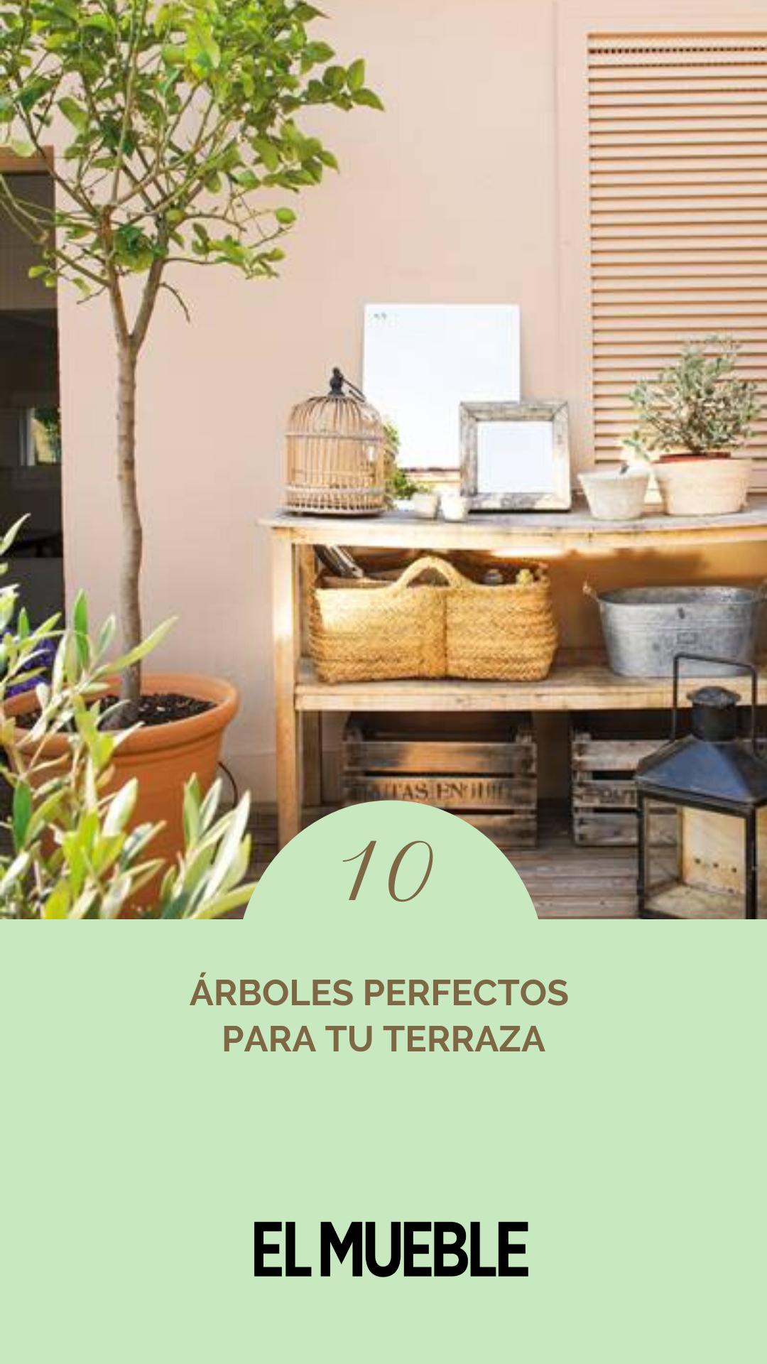 10 Arboles Perfectos Para Tu Terraza En 2020 Cultivo De Arboles Frutales Frutales En Maceta Arboles Frutales En Macetas