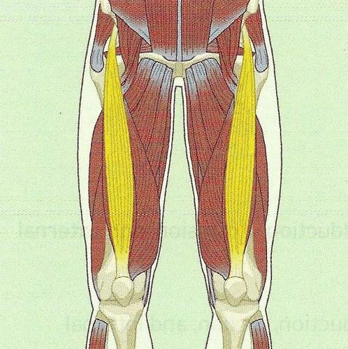NASM Muscles (Origins and Insertions) Flashcards   Quizlet   NASM ...
