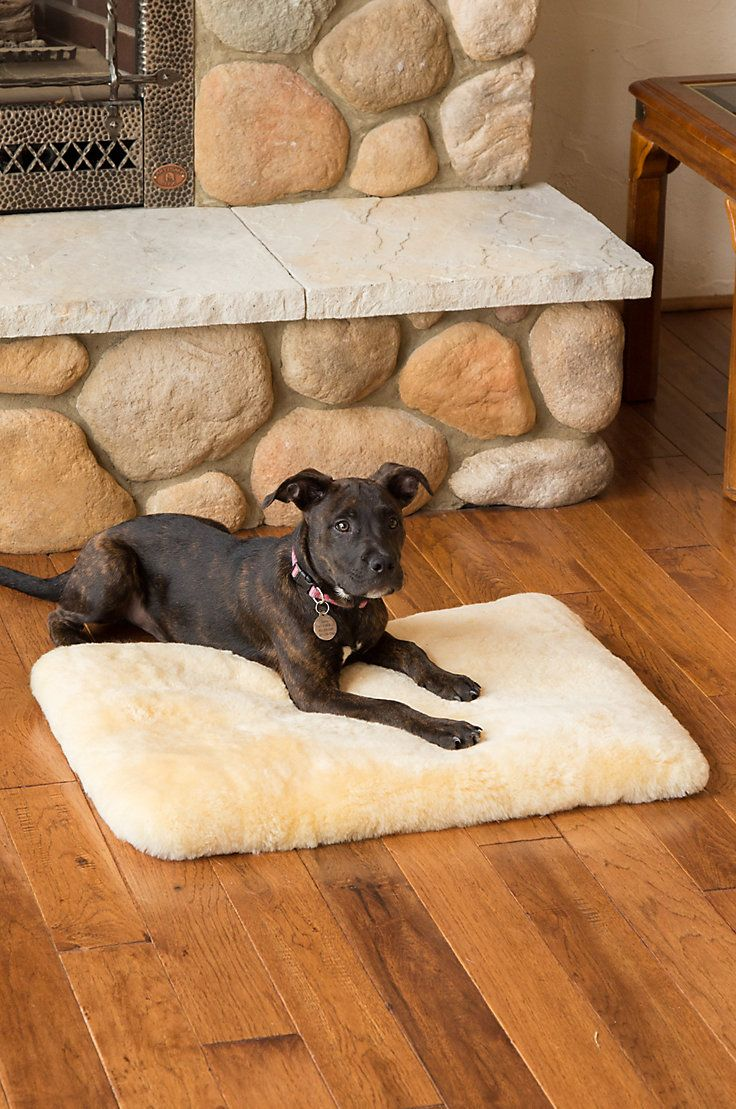 Fashioned In Genuine Australian Sheepskin This Plush Bed Will Let Your Dog Or Cat Sleep Like Royalty Overlandsheepskin