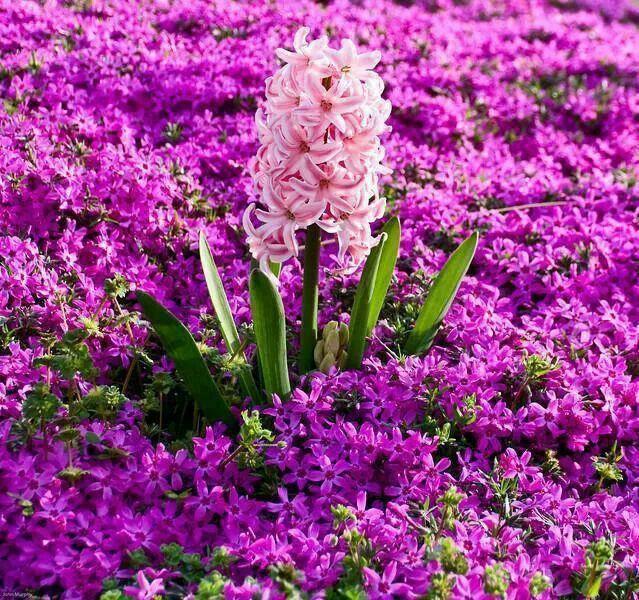 Blooms Of Purples