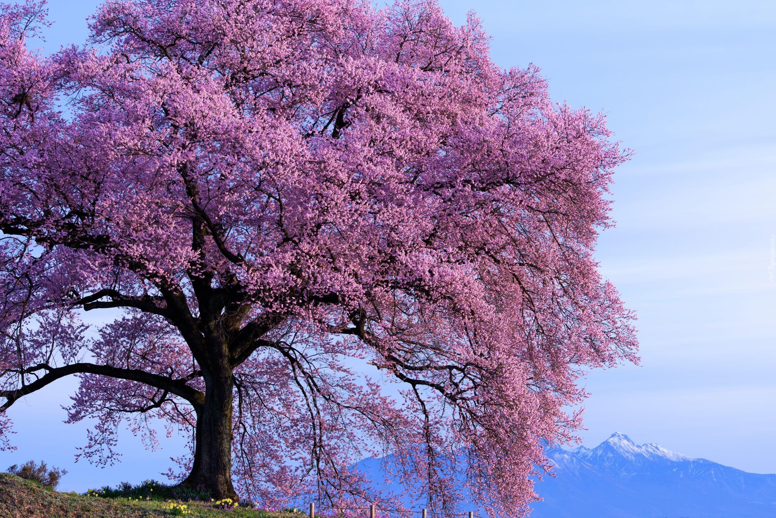 Kwitnace Drzewo Wiosna Gory Spring Flowers Beautiful Flowers Spring Tree