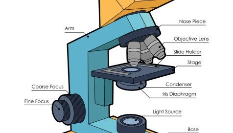 Microscope Diagram Unlabeled Bowling Alley Lane Labeled And Blank Parts Of A